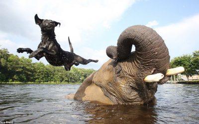 ¡ Una de elefantes !